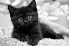 Svart kattunge hemma Royaltyfria Bilder