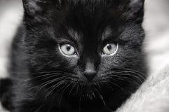 Svart kattunge hemma Fotografering för Bildbyråer