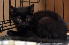 Svart kattunge i en bur royaltyfria foton