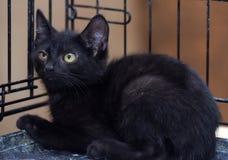 Svart kattunge i en bur arkivfoto