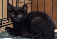 Svart kattunge i en bur royaltyfri bild