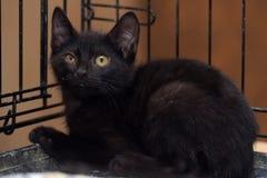Svart kattunge i en bur royaltyfri fotografi