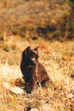 Svart kattunge i nedgånglövverk royaltyfri bild
