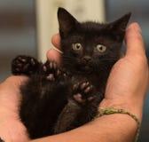 svart kattunge little arkivfoton