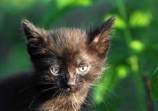 svart kattunge little som är utomhus- Fotografering för Bildbyråer