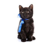 Svart kattunge med en blå pilbåge Royaltyfri Fotografi