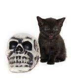 Svart kattunge med skallen Royaltyfri Foto
