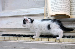Svart kattunge med vita band Royaltyfri Bild