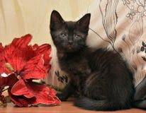 Svart kattunge och blomma fotografering för bildbyråer