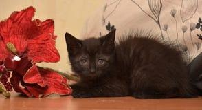 Svart kattunge och blomma arkivbilder