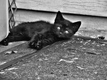 Svart kattunge på farstubron Royaltyfria Bilder