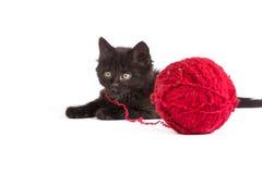 Svart kattunge som leker med ett rött garnnystan på vitbakgrund Fotografering för Bildbyråer