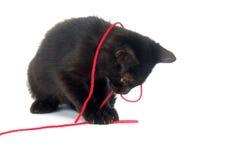 svart kattunge som leker rött garn Royaltyfri Foto