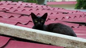 Svart kattunge som ligger på taket arkivfilmer