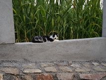 svart kattwhite Royaltyfri Foto