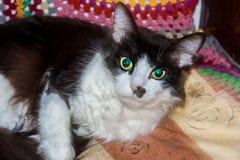 svart kattwhite Arkivbilder