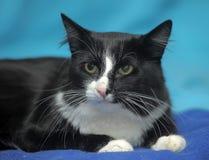 svart kattwhite Arkivfoton