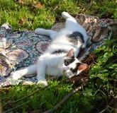 svart kattwhite Royaltyfri Fotografi