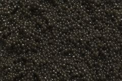 Svart kaviarn?rbild som en bakgrund Textur av den svarta kaviaren royaltyfria bilder