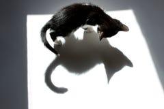 Svart Kitten And His Shadow Over vit bakgrund arkivbild