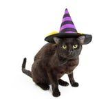 Svart Kitten Wearing Purple Halloween Witch hatt arkivbild