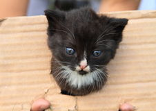 Svart kittie Royaltyfri Foto