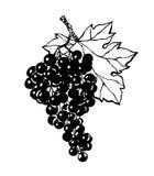 Svart kontur av druvor också vektor för coreldrawillustration stock illustrationer