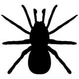 Svart kontur av en spindel Arkivfoto