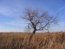 Svart kontur av ett gammalt träd på bakgrunden av stäppen bland det torra gräset arkivfoton