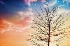 Svart kontur av ett träd mot en solnedgång, älskvärt landskap av naturen Royaltyfri Foto