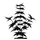 Svart kontur för Bush marijuana Cannabinoid Hampa för behandlingen av marijuanaolja cannabis Vektorillustration på royaltyfri illustrationer