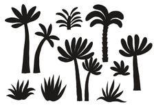 Svart konturuppsättning för palmträd Fotografering för Bildbyråer