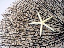 Svart korall och sjöstjärna Arkivfoto