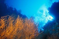 svart korallguinea nya papua Fotografering för Bildbyråer