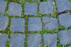 Svart kullerstentrottoar som täckas med grön mossa royaltyfri bild