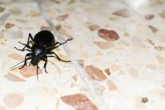 Svart läskig krypkrypande på golvet Royaltyfri Fotografi