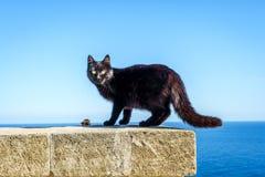 Svart lös katt i Leuca, Puglia, Italien Royaltyfri Fotografi