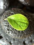 svart lavaleafston Arkivfoton