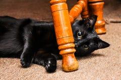 svart leka för katt Arkivfoton