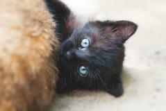 Svart liggande kattunge - gulliga Cat Enjoying Life Outdoors fotografering för bildbyråer
