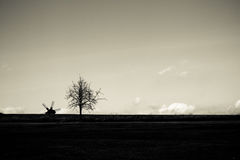 svart liggandewhite Arkivfoto