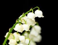 svart liljadal för bakgrund Royaltyfri Fotografi