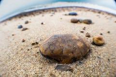 Svart linje sten för jättebruntguling Arkivfoto