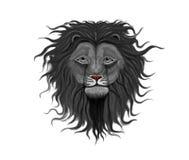 svart lion Arkivfoton