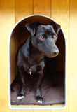 Svart liten hund i hundkoja arkivbild