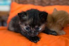 Svart liten kattunge som ligger på soffan Royaltyfria Foton
