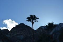Svart mountainridge med den enkla palmträdet Fotografering för Bildbyråer
