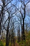 Svart nakna träd vid en bana i en parkera royaltyfria bilder