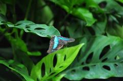 Svart och blått Royaltyfria Foton