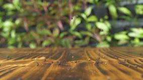 Svart pepparkorn som faller och rullar på träbakgrund Svartpepparsmaktillsats för att laga mat mat Kryddig ingrediens för stock video